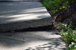 Sidewalk uneven and damaged by tree roots